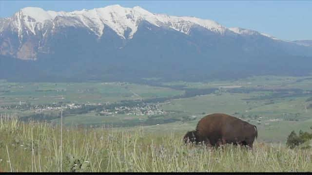 The National Bison range in Moiese. (MTN News photo)