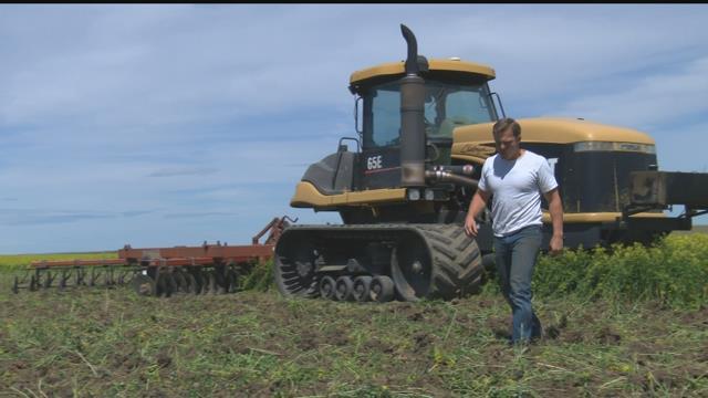 Bob Quinn owns and operates an organic farm and ranch near Big Sandy. Quinn's grandfather started the operation near Big Sandy 97 years ago. (MTN News photo)