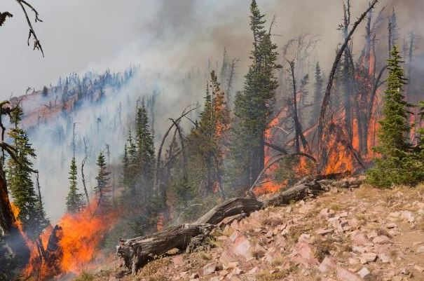 The Rice Ridge fire is burning just northeast of Seeley Lake. (inciweb.org photo)