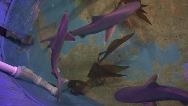 Sharks found in basement of Hudson Valley home
