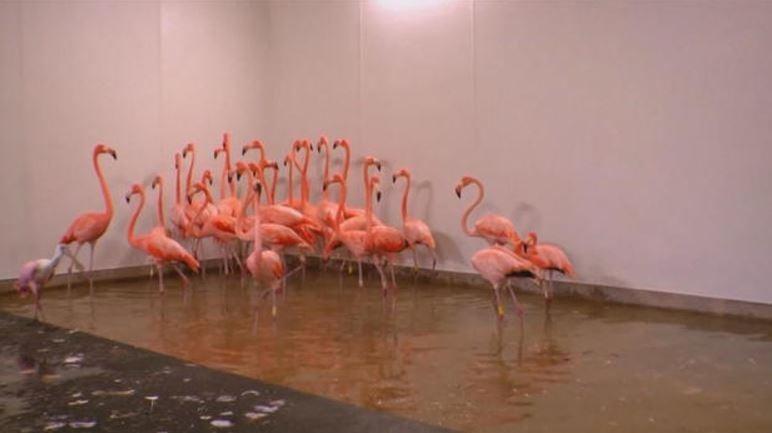 (Zoo Miami)