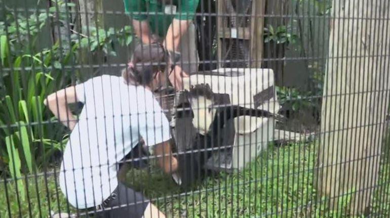 (Central Florida Zoo)