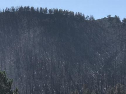 Fire has weakened roots and heavy limbs on a significant amount of charred standing timber across this entire mountainside east of Landusky and throughout the area burned by the July Fire. (Jonathan Moor)