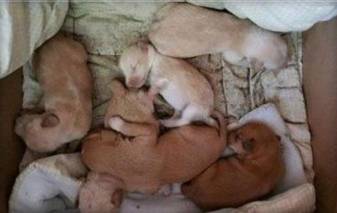 Puppies found left for dead in river expected to survive
