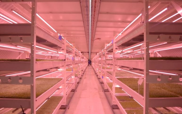 Rows of microgreens at the Growing Underground facility in London / GROWING UNDERGROUND