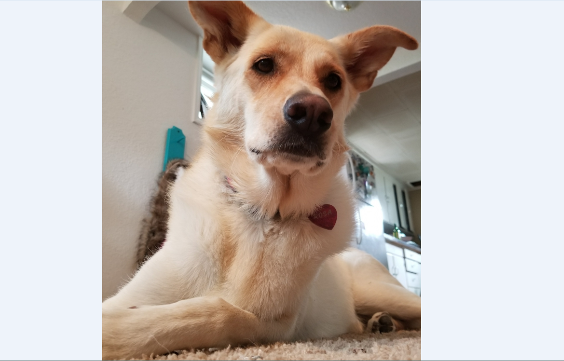 A new Google Photos feature can recognize pets by their faces and organize their photos. Q2 News photo.