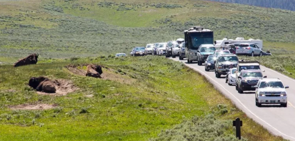 Annual visitation has increased by over 40% since 2008, leading to traffic jams like this one in Hayden Valley. (NPS / Neal Herbert)