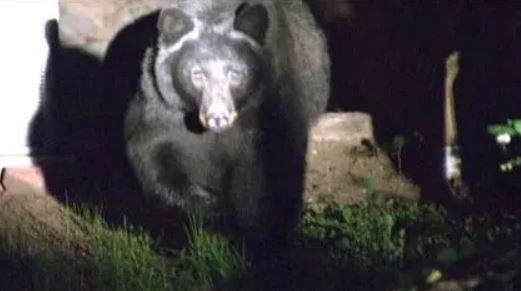 File photo of a black bear. (credit: CBS4)