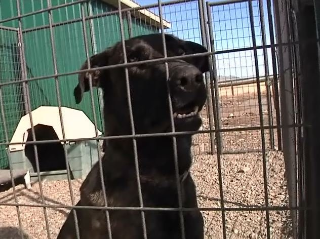 The Stafford Animal Shelter was vandalized Feb. 5, 2015