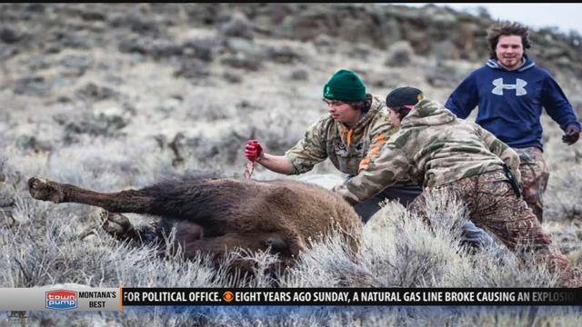 Tribal hunts raise concerns near gardiner krtv news in for Bison motors great falls mt