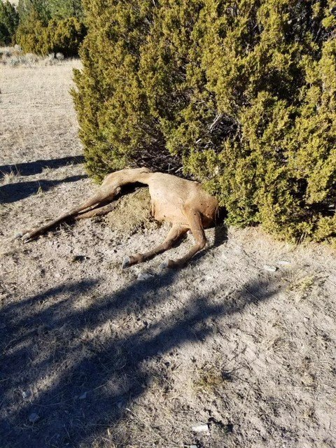 Wardens seek information in townsend area poached elk case for Montana fish and wildlife