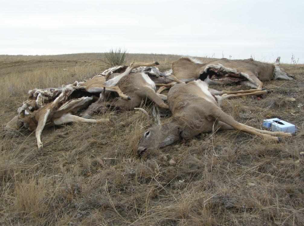 Montana Game Warden Investigating Killing Of Six Deer Near