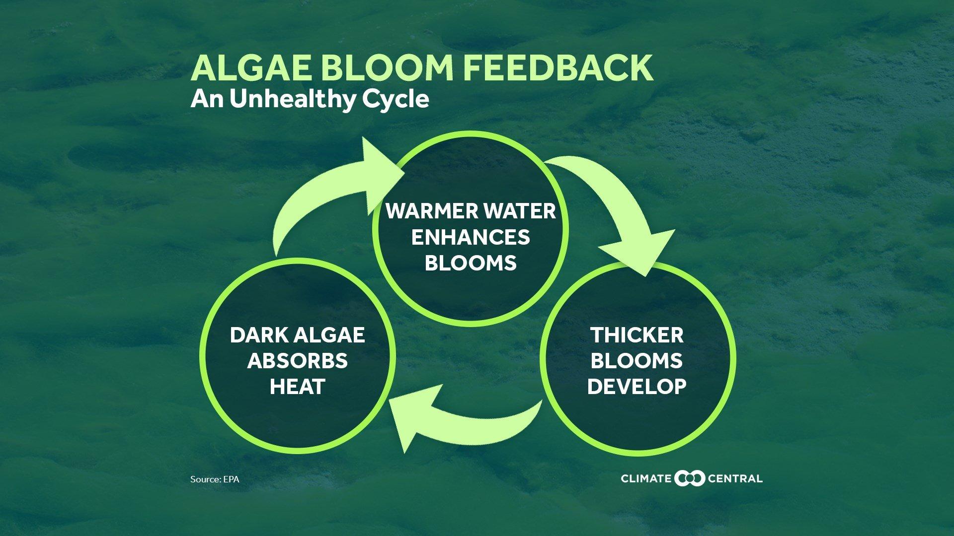 Algae Blooms & Climate Change